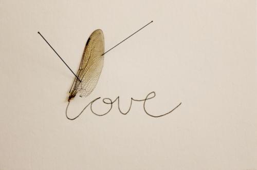 """Anna Talens / """"Love"""", 2013, Libellenflügel,entomologischen Nadeln und Tinte, 10 x 15 x 3 cm"""